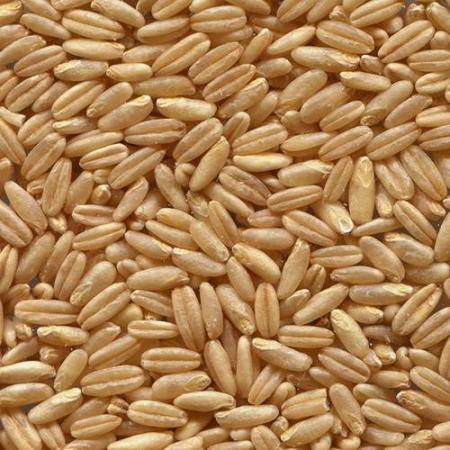 avena grano