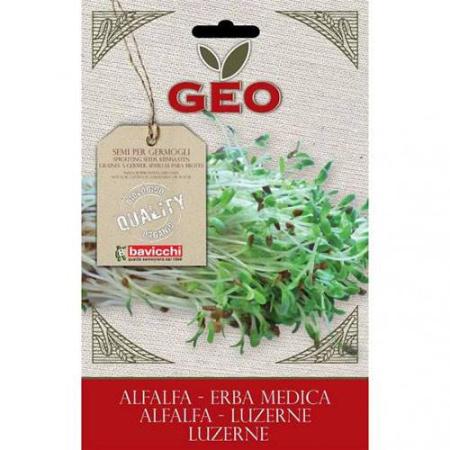 semillas de alfalfa germinar