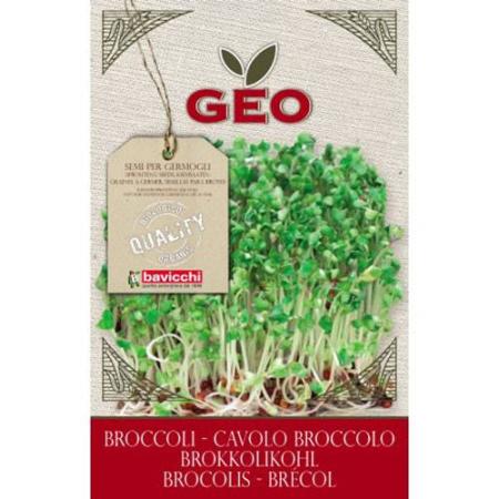 semillas de brocoli germinar