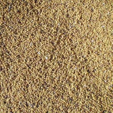 Semillas de alfalfa